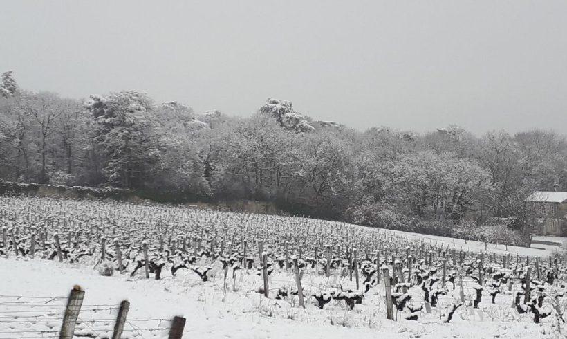 Notre vignoble du Beaujolais sous la neige